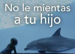 Enlace a Delfines en cautividad