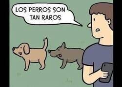 Enlace a Estos perros...