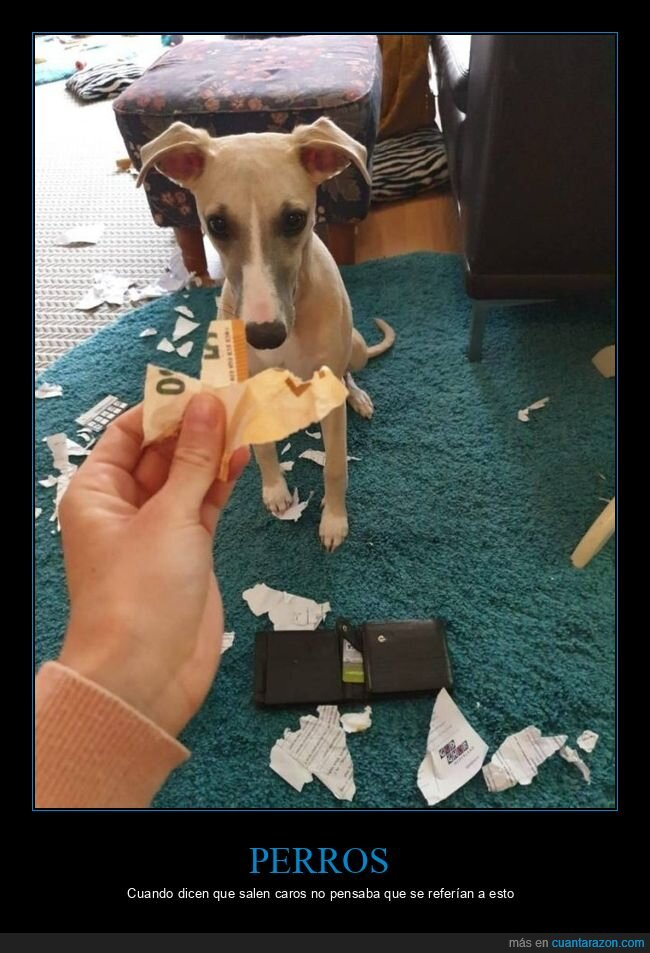billete,dinero,fails,perro