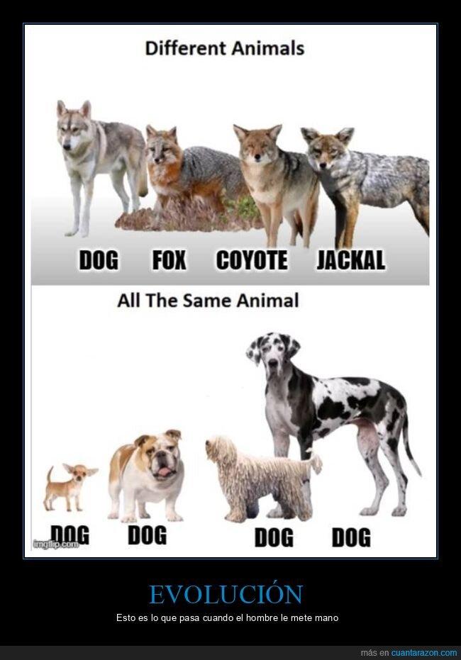 diferencias,especies,perros,razas