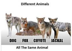 Enlace a Animales distintos VS El mismo animal