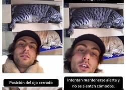 Enlace a Este hombre promete brindar información nueva sobre los gatos y comparte varios datos interesantes