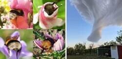 Enlace a Imágenes que muestran lo maravillosa que puede ser la Naturaleza