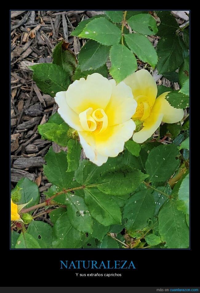 69,flor,wtf