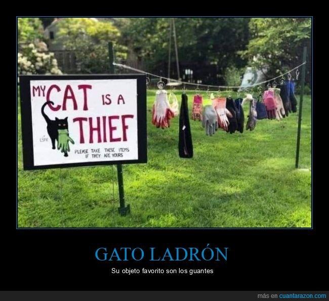 carteles,gato,guantes,ladrón