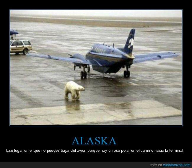 aeropuerto,alaska,avión,oso,polar,wtf
