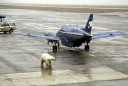 Enlace a Problemas típicos de Alaska