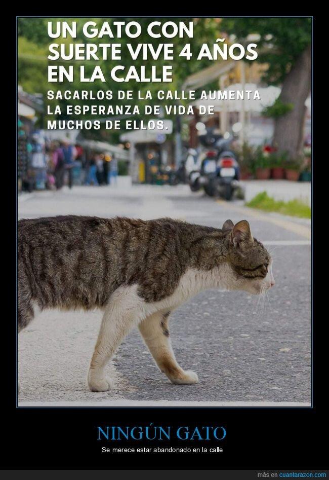 calle,gatos