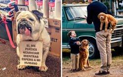 Enlace a Reconfortantes publicaciones sobre perros para alegrarte el día