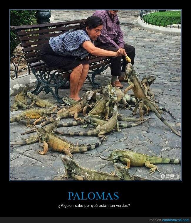 iguanas,wtf