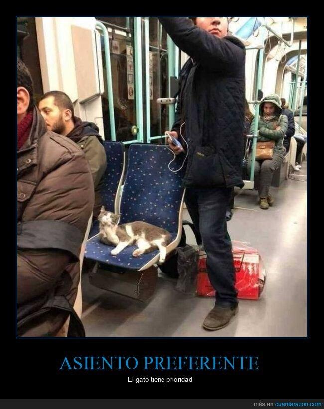 asiento,gato,metro