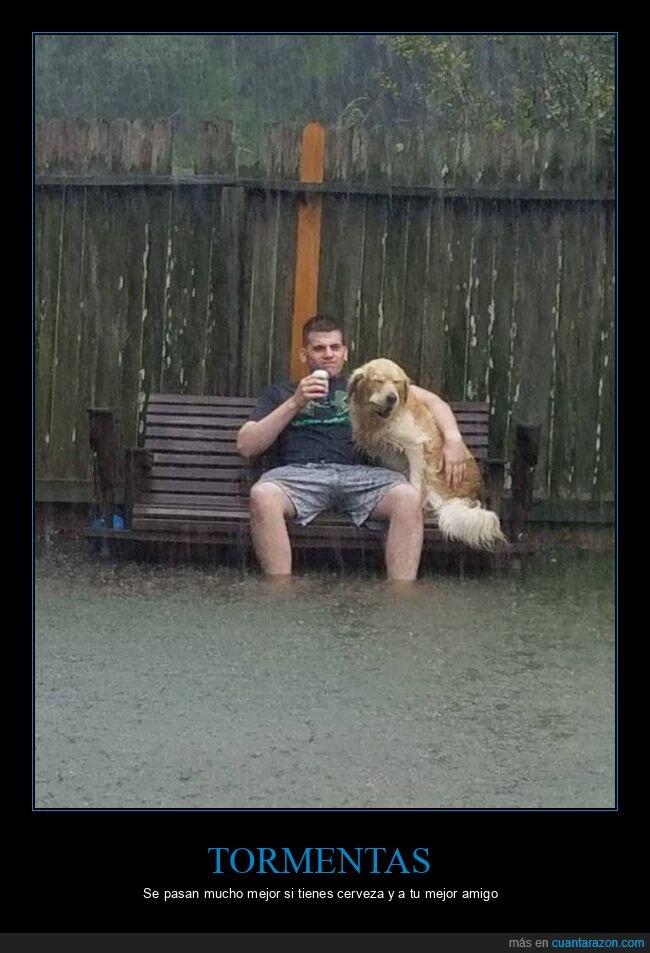 cerveza,inundación,perro,tormenta