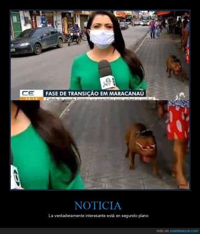 gafas de sol,perro,reportera,segundo plano