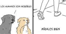 Enlace a Este artista muestra lo que dirían los animales si pudieran hablar