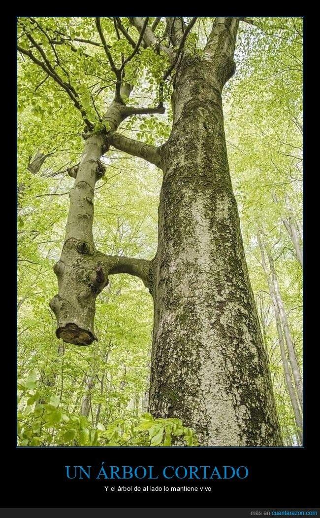 árboles,cortado,vida
