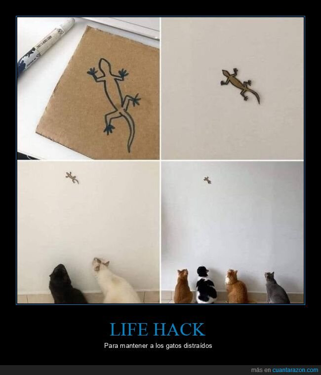 distraer,gatos,lagartija