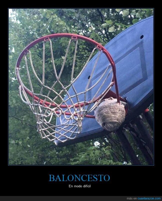 baloncesto,canasta,colmena,wtf