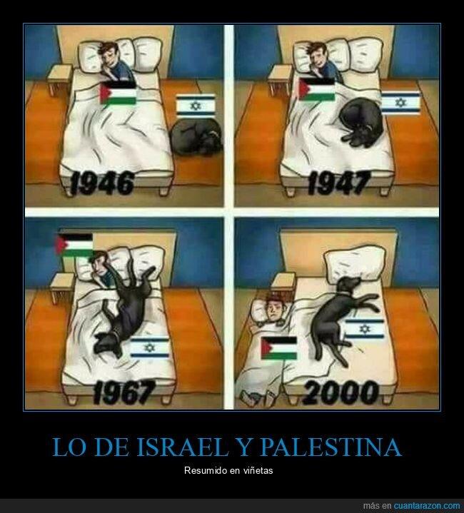 cama,israel,palestina,perros