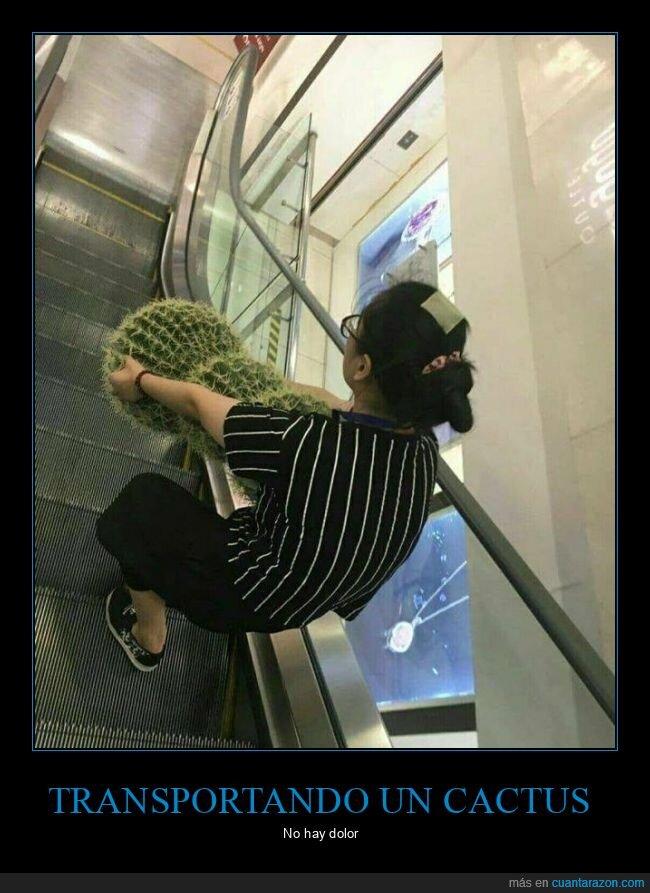 cactus,wtf