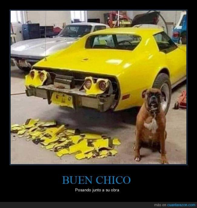 coche,fails,perro