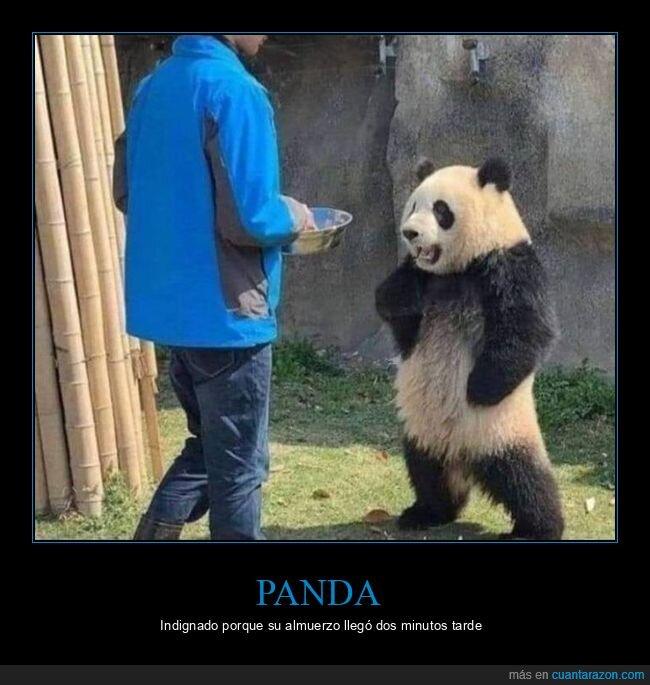 comida,panda,postura,wtf
