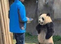 Enlace a La puntualidad es importante para los pandas