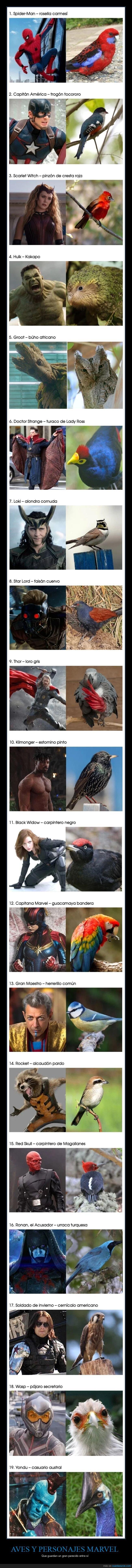 aves,parecidos,personajes marvel