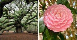 Enlace a Ejemplos de maravillas botánicas que te refrescarán el alma