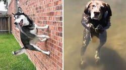 Enlace a «¿Qué le pasa a tu perro?»: La gente está publicando fotos de perros que «funcionan mal»