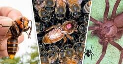 Enlace a Los 10 insectos más venenosos y mortales del mundo