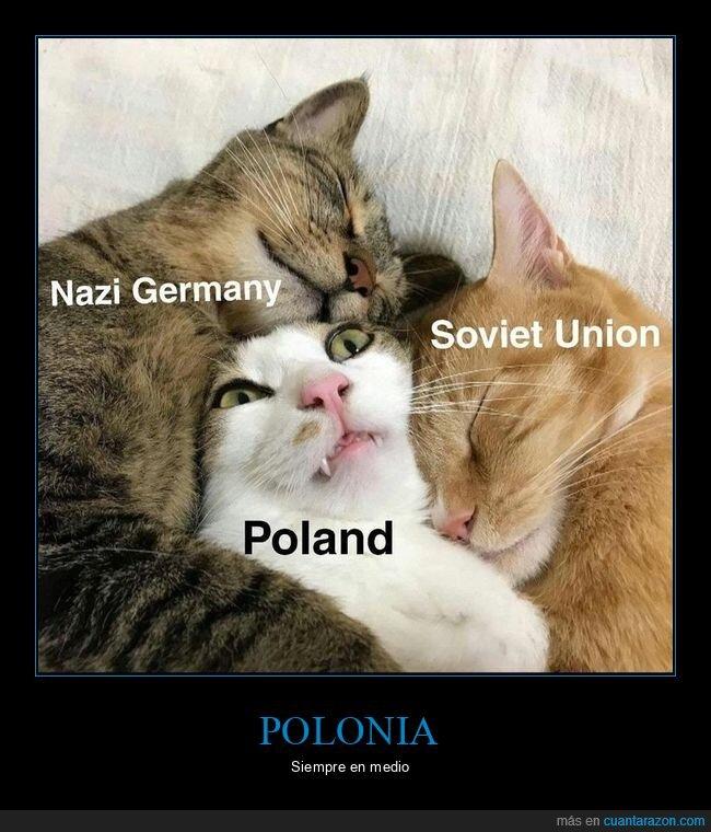 alemania,gatos,nazis,polonia,unión soviética