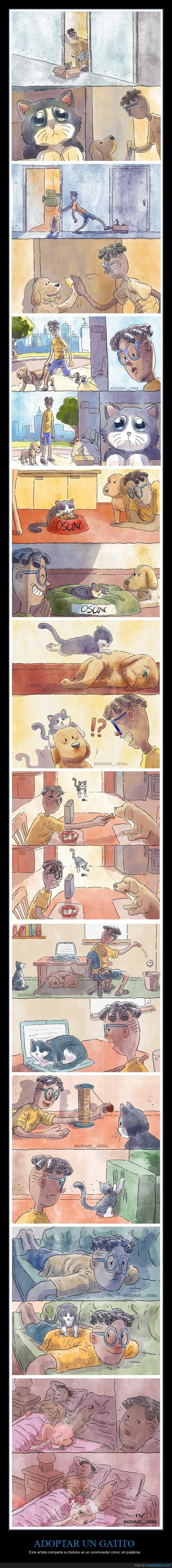 adoptar,cómic,gato