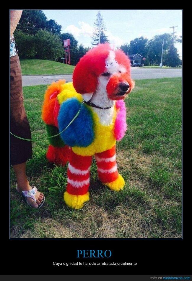 perro,pintado,wtf