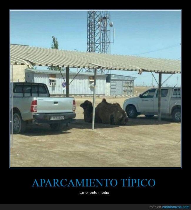 aparcamiento,camello,wtf