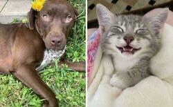 Enlace a Fotos de las adopciones de mascotas más reconfortantes del mes de Mayo