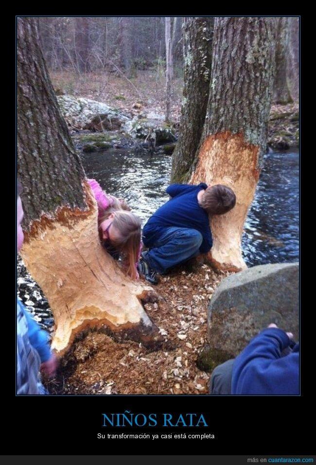 árboles,niños,royendo