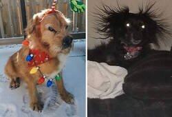 Enlace a Fotos de perros nada favorecidos