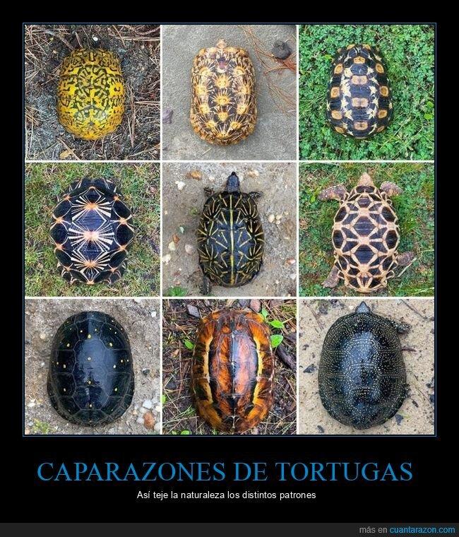 caparazones,patrones,tortugas