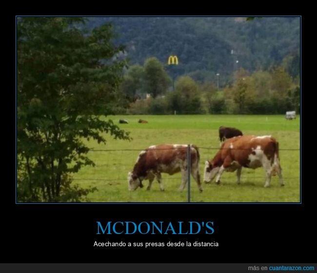 mcdonald's,vacas