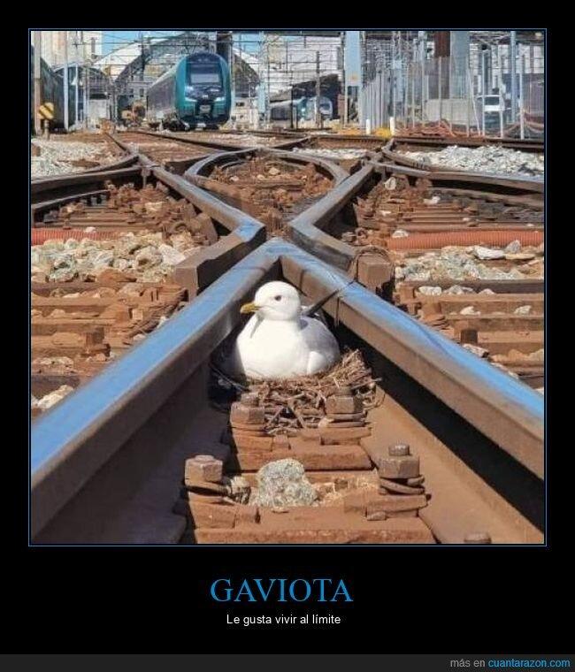 gaviota,nido,tren,vías