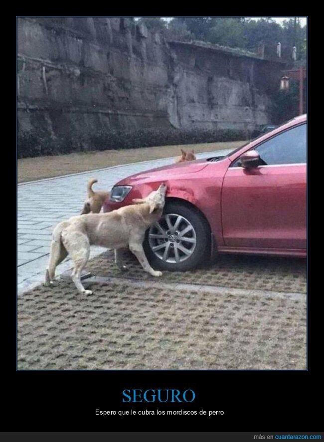 coche,mordiendo,perro