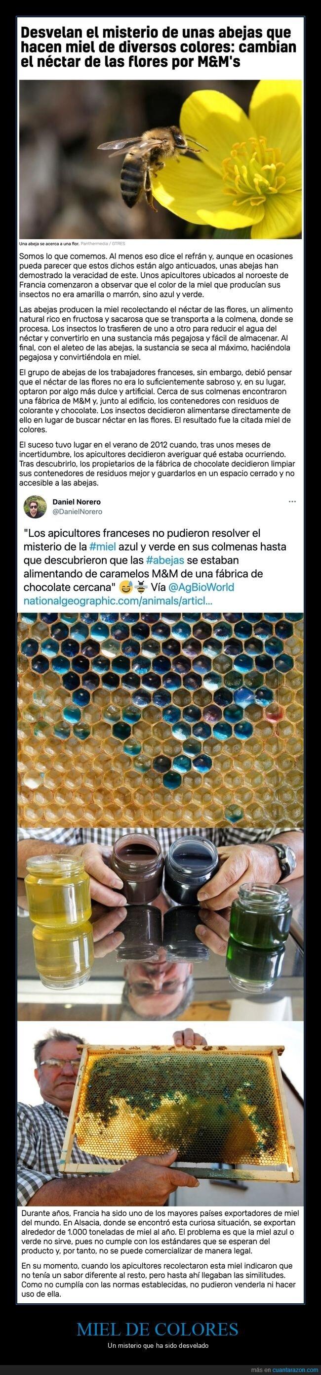 abejas,colores,m&m,miel