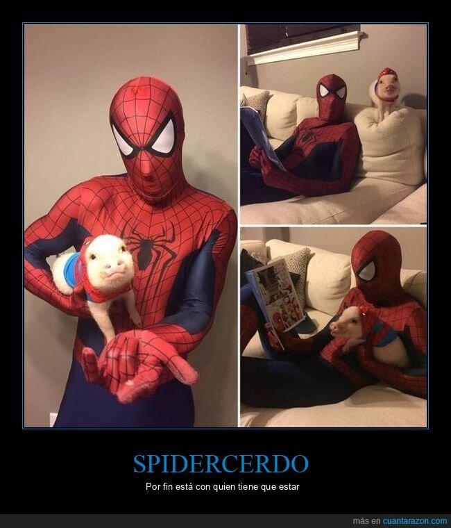 cerdo,spiderman