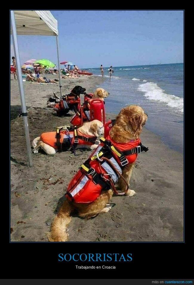 perros,socorristas