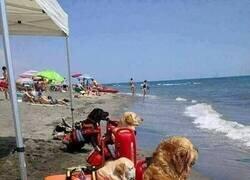 Enlace a Los vigilantes de la playa