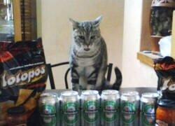 Enlace a Gato asombrado