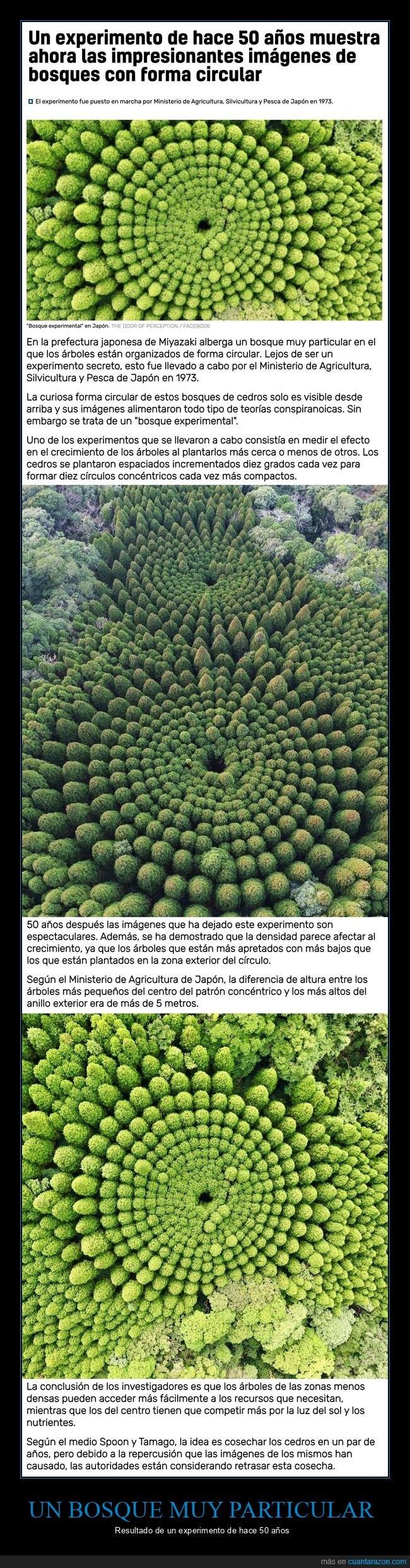 50 años,árboles,bosque,circular,experimento