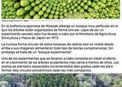 Enlace a Un experimento de hace 50 años muestra ahora las impresionantes imágenes de bosques con forma circular