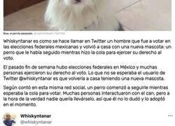 Enlace a Un perro sigue a un hombre mientras iba a votar y acaba siendo adoptado: