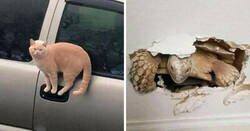 """Enlace a Fotos extrañas de animales que """"no tienen explicación"""""""